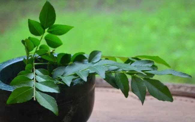 Zitrone für Haarausfall - Zitronensaft, Kokosöl und Curry-Blätter