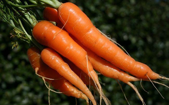 Honig für dunkle Kreise - Honig, Karotten und Tomaten