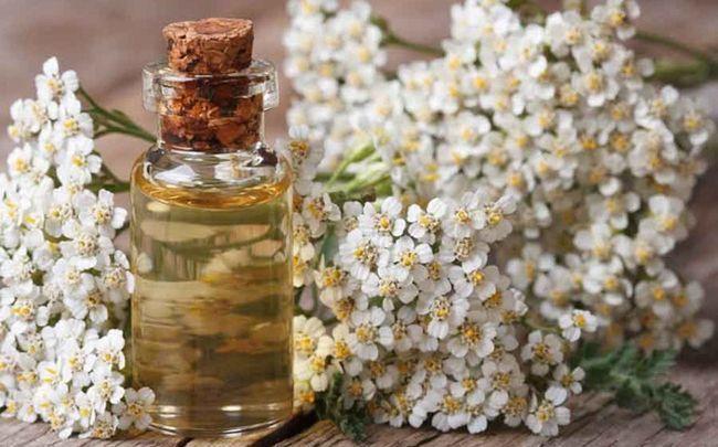 Honig für dunkle Kreise - Honig, Kamillenöl und Kartoffeln