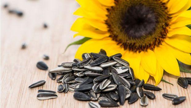 Vorteile von Sonnenblumenkerne für die Haut