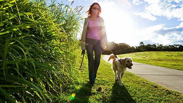 Gehen Sie mit einem Haustier mit, wenn bei einem Spaziergang