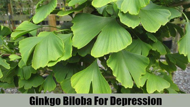 Verwenden Sie Ginkgo Biloba Minor Depression