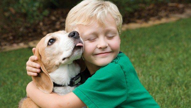 Versorgung für ein Haustier