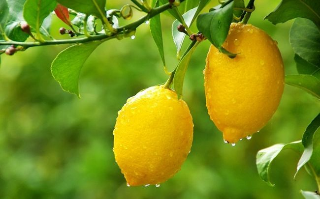 wie man glänzende Nägel bekommen - Zitrone